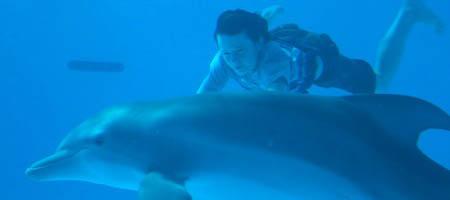 История дельфина 3D / Dolphin Tale