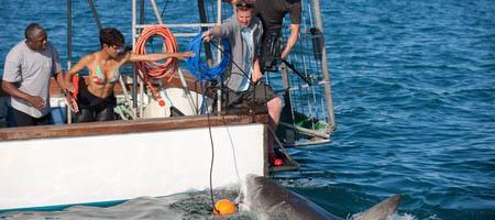 Заклинательница акул / Dark Tide