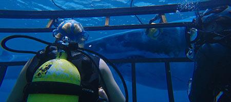 Синяя бездна / 47 Meters Down